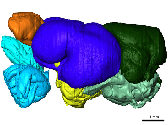 3D modell of the brain